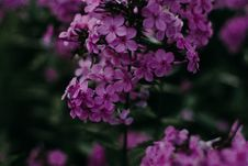 Free Selective Focus Photography Of Purple Flowers Stock Images - 126179194