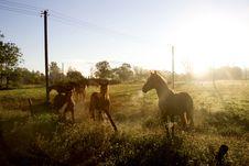 Free Three Brown Horses Under Blue Sky Stock Photos - 126179213