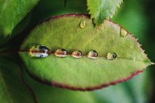 Free Five Dew Drops On Green Leaf Stock Photography - 126179222