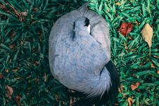 Free Top View Photo Of Gray And Blue Bird On Grass Field Royalty Free Stock Image - 126179396