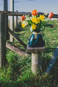 Free Person Taking Photo Of Pink And Yellow Flowers With Vase On Wooden Stand Stock Image - 126179581