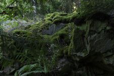 Free Photo Of Mossy Rocks And Fern Plants Stock Image - 126179701