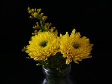 Free Yellow Chrysanthemum Royalty Free Stock Photo - 126179875