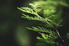 Free Selective Focus Photography Of Fern Leaves Stock Photo - 126180080