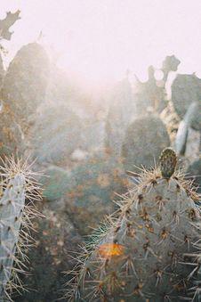 Free Closeup Photo Of Green Cactus Stock Photography - 126180252