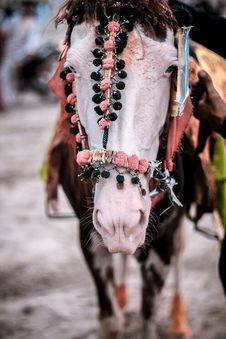 Free Closeup Photo Of Horse Wearing Accessories Royalty Free Stock Image - 126180426