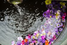 Free Flowers Floating On Water Stock Photography - 126180482