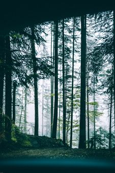 Free Scenic View Of Forest From Car Stock Photography - 126180762