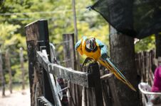 Free Close-Up Photography Of Bird Perched On Wood Stock Images - 126180814