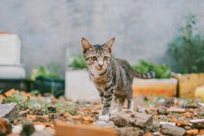 Free Selective Focus Photography Of Silver Tabby Cat Stock Images - 126180914
