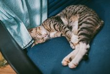 Free Silver Tabby Cat On Blue Suede Chair Beside Blue Towel Stock Photos - 126180953
