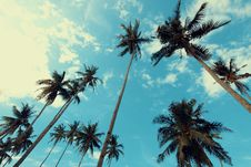 Free Palm Trees Under Blue Cloudy Sky Stock Photos - 126181003