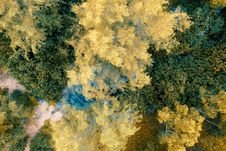 Free Top View Photo Of Yellow And Green Leafed Trees Royalty Free Stock Photos - 126181088