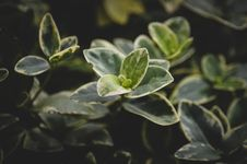 Free Close Up Photo Of Green Leaf Plant Stock Photography - 126181112