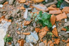 Free Green Leafed Plant Surrounded By Stones Stock Photos - 126181193