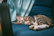 Free Silver Tabby Cat Lying On Teal Padded Chair Royalty Free Stock Image - 126181326