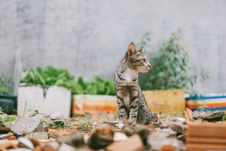 Free Close-up Photography Of Gray Tabby Cat Royalty Free Stock Photography - 126181477