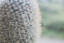 Free Close-up Photography Of Green Cactus Stock Image - 126181571