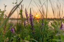Free Purple Lavender Flowers Selective-focus Photography At Sunset Stock Image - 126181861