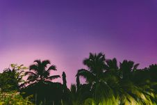Free Silhouette Photo Of Palm Trees Royalty Free Stock Photos - 126182198