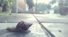 Free Brown Snail Crawling On Concrete Pavement Royalty Free Stock Photos - 126182218