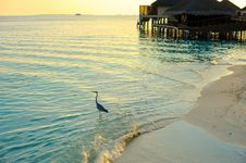 Free Gray Heron Standing On Large Clear Body Of Water Stock Photography - 126182422