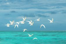 Free Flock Of White Seagulls Flying Over The Large Body Of Water Stock Photos - 126182523