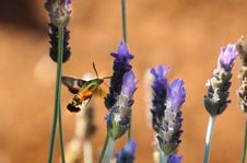 Free Photo Of Green And Orange Moth On Flower Royalty Free Stock Image - 126182726