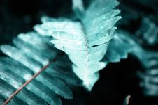 Free Macro Photography Of Fern Leaves Stock Photography - 126182762