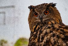 Free Selective Focus Photo Of Owl Royalty Free Stock Images - 126182869