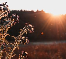 Free Closeup Photo Of Plant During Golden Hour Royalty Free Stock Photo - 126182915