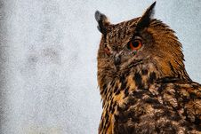 Free Shallow Focus Photography Of Brown Owl Stock Photography - 126182972