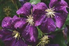 Free Closeup Photo Of Purple Petaled Flowers Stock Image - 126183261