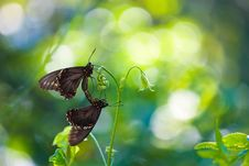 Free Shallow Focus Photography Of Butterflies Stock Photo - 126183610