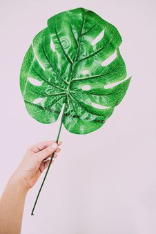 Free Person Holding Green Leaf Plant Stock Photography - 126184332