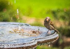 Free Shallow Focus Photography Of Bird Standing On Bird Bath Stock Image - 126184361