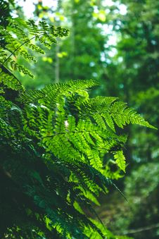 Free Shallow Focus Photography Of Green Ferns Stock Photo - 126184800