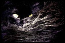 Free Black, Mammal, Cat, Vertebrate Stock Image - 126185161