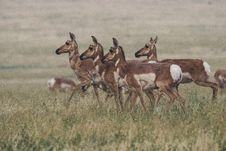 Free Herd Of Brown Doe Walking On Field Royalty Free Stock Photo - 126185615
