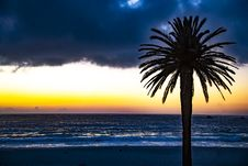 Free Silhouette Of Tree Near Shore Royalty Free Stock Photo - 126185645