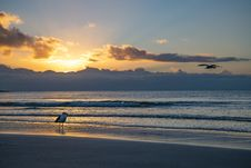 Free Seagull Standing On The Shore Stock Photo - 126185780