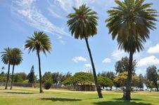 Free Tree, Palm Tree, Sky, Woody Plant Stock Photos - 126185783