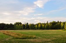 Free Green Pine Trees And Green Grass Field Royalty Free Stock Photo - 126185815