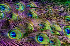 Free Green, Purple, And Blue Peacock Feather Digital Wallpaper Royalty Free Stock Images - 126185929
