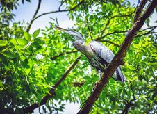 Free Bird Perched On A Branch Stock Photo - 126186290
