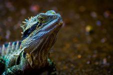 Free Green Lizard Stock Image - 126186421
