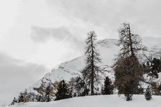 Free Black Withered Trees Across Snow-capped Mountain Royalty Free Stock Images - 126186719
