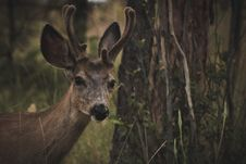 Free Brown Deer Near Tree Royalty Free Stock Photo - 126187075