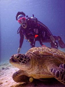 Free Scubadiver Near Brown Turtle Stock Photos - 126187113