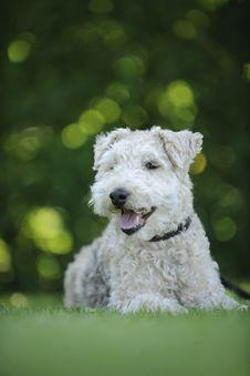 Free White Dog Stock Photography - 126187152